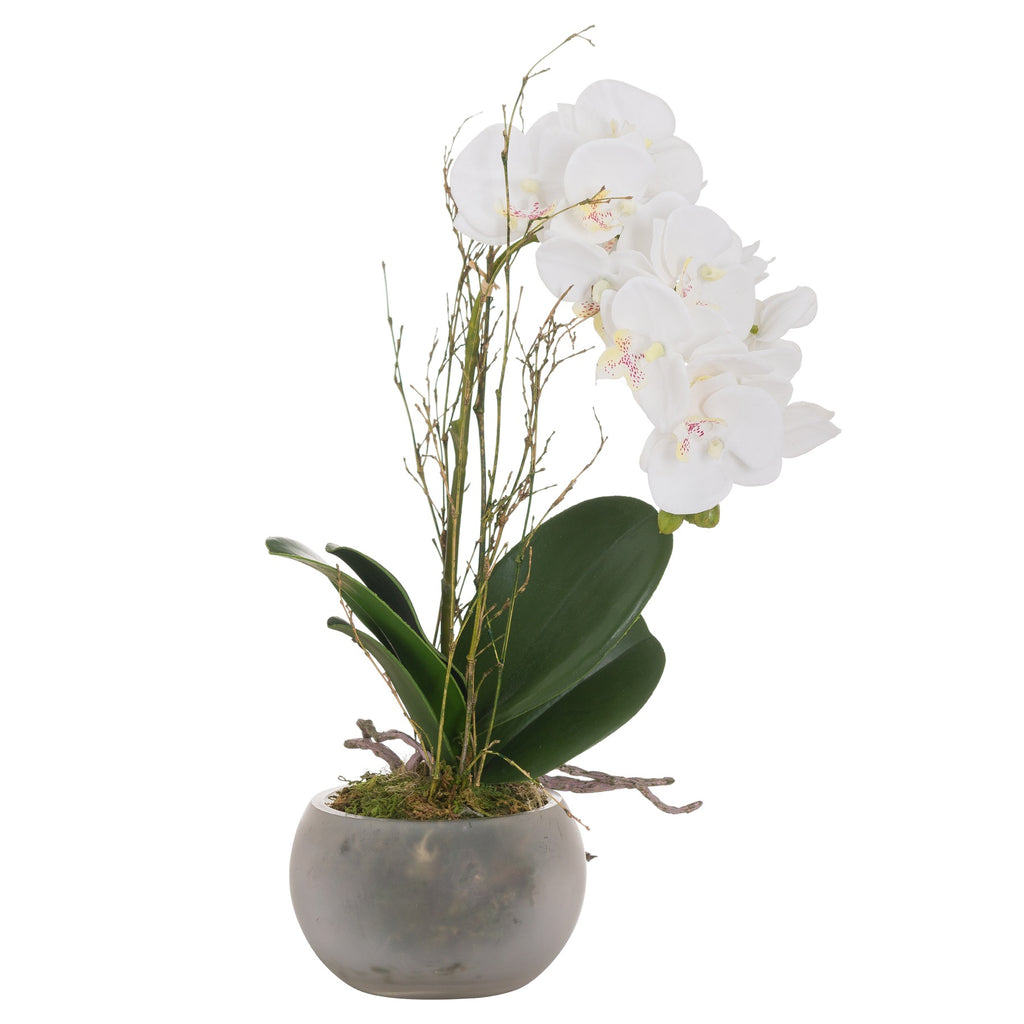 Small White Orchid In Frosted Pot