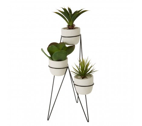 Succulents with Metal Stand