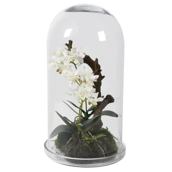 White Orchid in Glass Dome