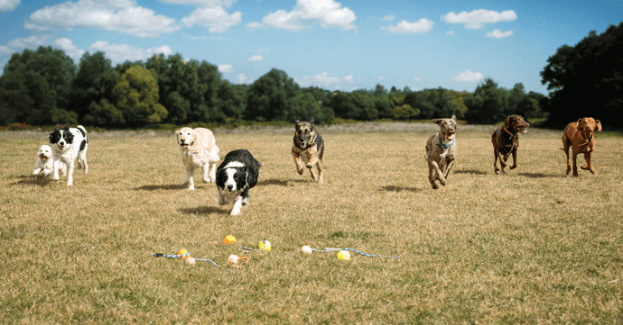 Dog Park Tips For Your First Day At The Park