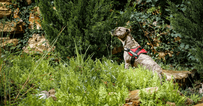 Dog Walking Harness vs. Collar: Which Is Better?