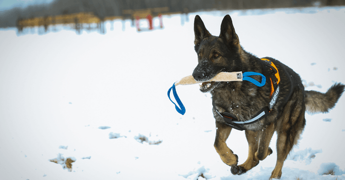 Shop Our K9 Dog Harness & Know 3 Factors Behind Drug Dog & Handler Reliability