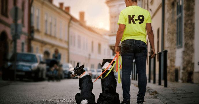 Best Police Dog Harness For Top Police Dog Breeds