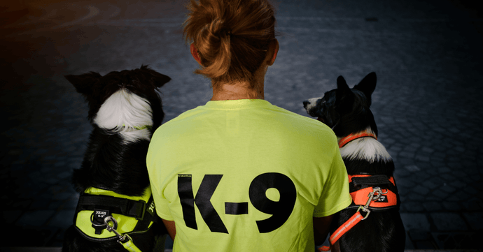 Dog Training: Agility Skills & More For Your K9