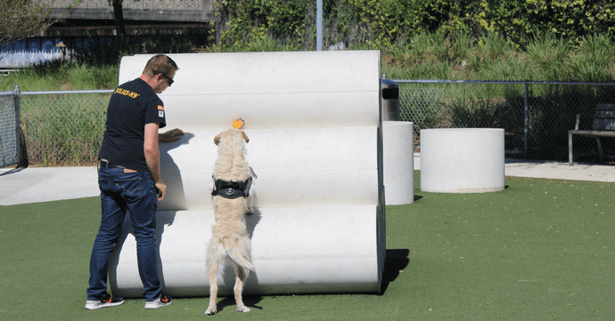 Dog Obedience Training: Common E-Collar Mistakes to Avoid