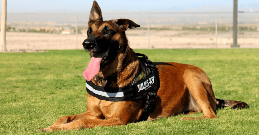 Police Dogs: A Day In The Life Of A Dog on Duty
