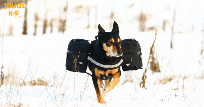 Tactical Dog Harness & Gear For All Dogs