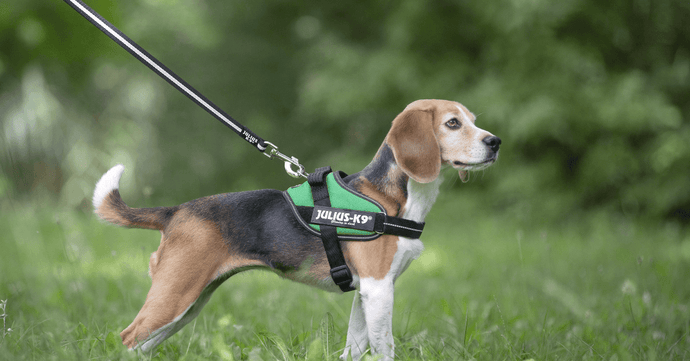Leash Training & Other Ways To Prevent Losing Your Dog