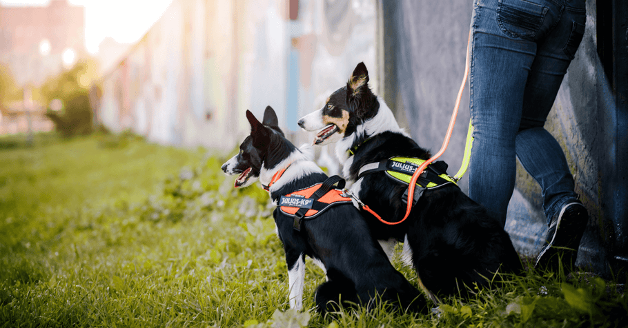 Dog Essentials: Everything You Need to Know