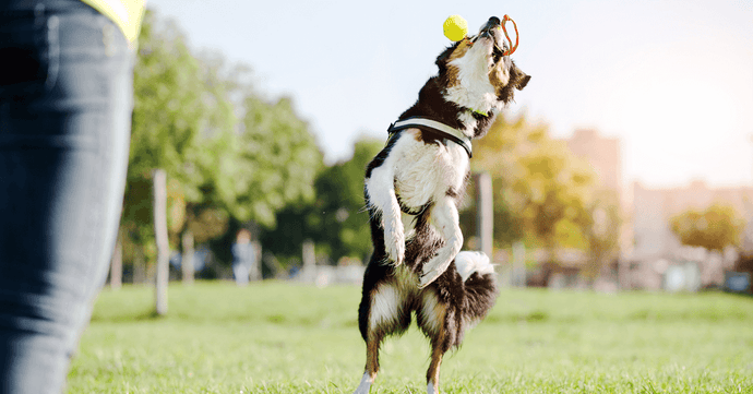 K9 Dog Training: Everything You Need to Know