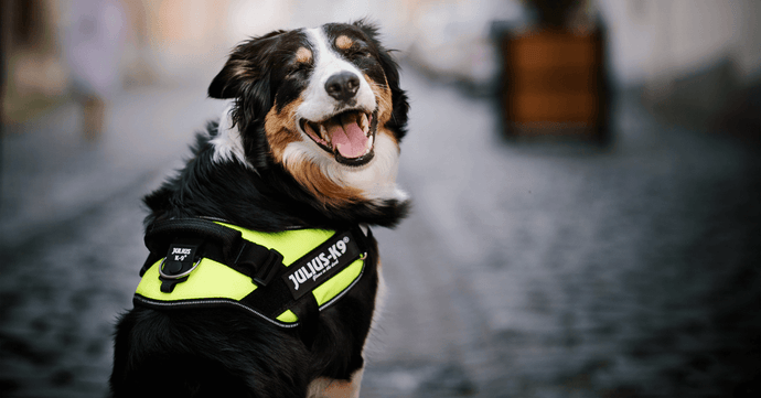 Police Dogs & The History Behind These Dogs