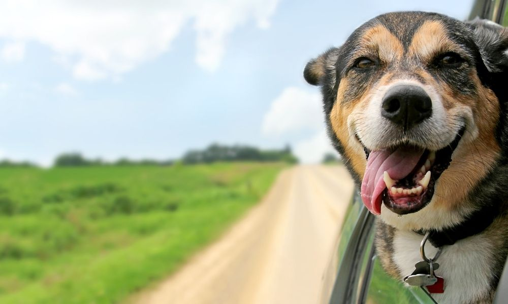How To Keep Your Dog Safe in Your Car