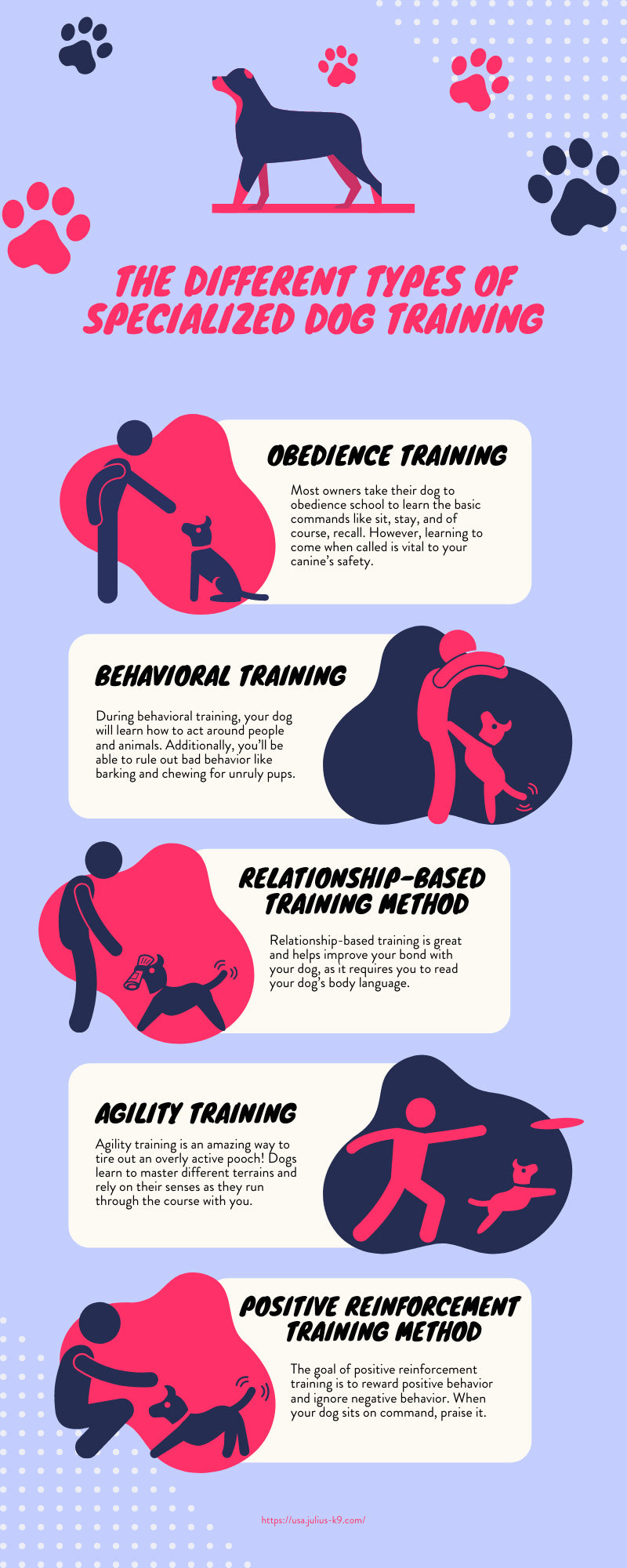 The Different Types of Specialized Dog Training