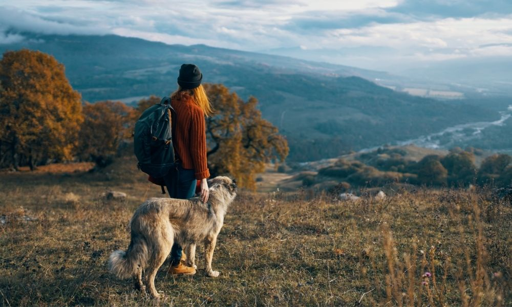Hiking Gear and Accessories for Dogs
