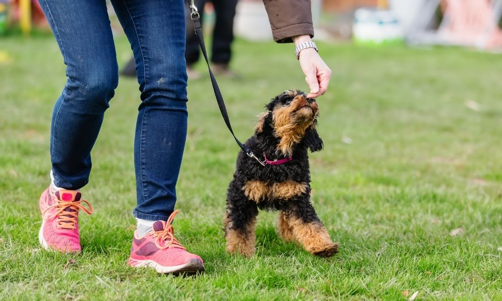 The Importance of Leash Training Your Dog