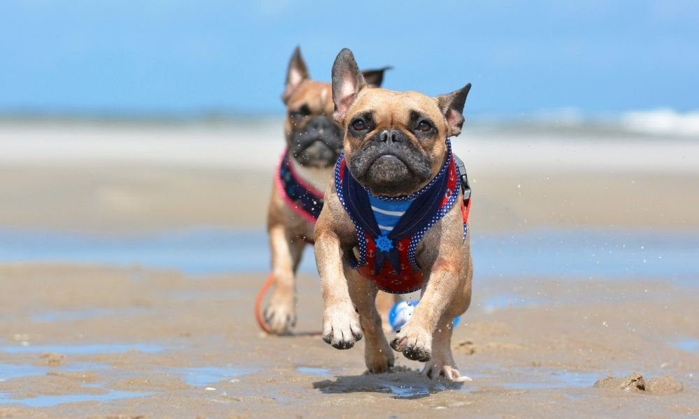 The Different Types of Dog Harnesses