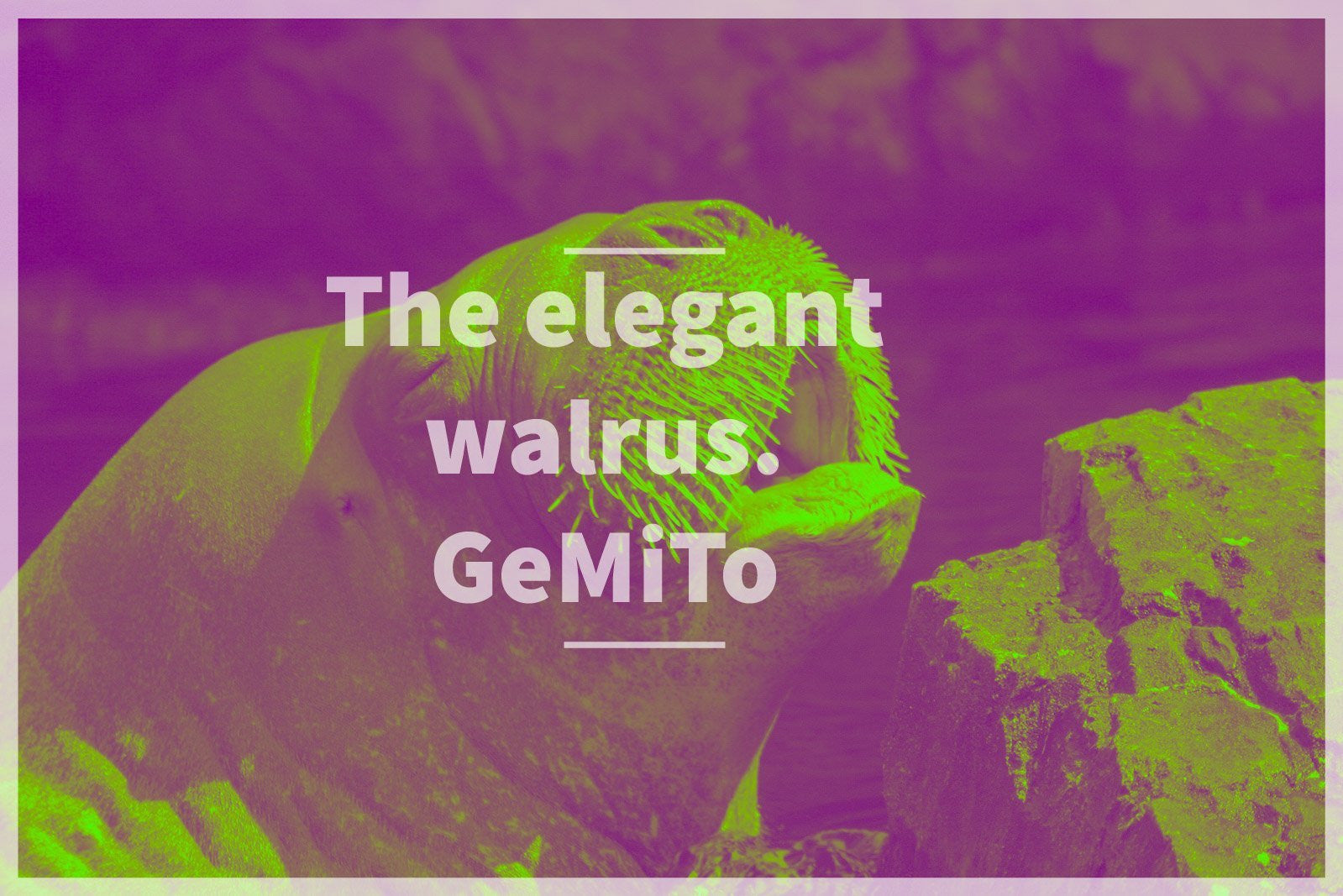 THE ELEGANT WALRUS