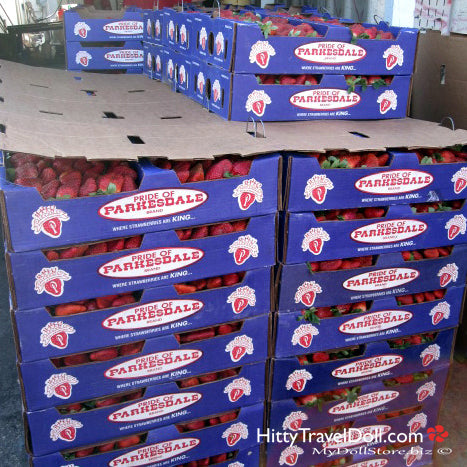 Crates of Plant City Strawberries