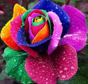 Rainbow Rose Diamond Painting Kit - DIY