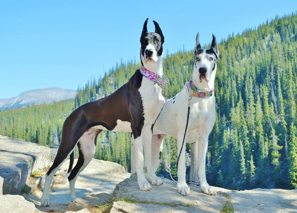 Great Dane Love Diamond Painting Kit - DIY