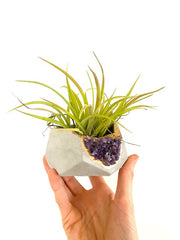 Geode Concrete Planter with Air Plant – Large Hexagon - Time-Peace