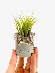 Geode Concrete Planter with Air Plant - Round - Time-Peace