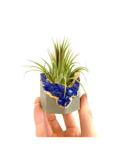Geode Concrete Planter with Air Plant - Octagon - Time-Peace