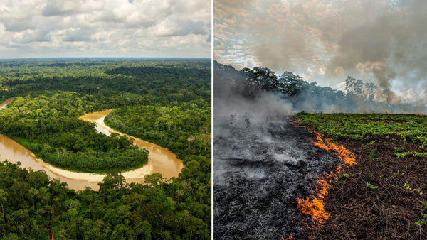 Fires in Brazil's Amazon rainforest rose by almost 20% in June