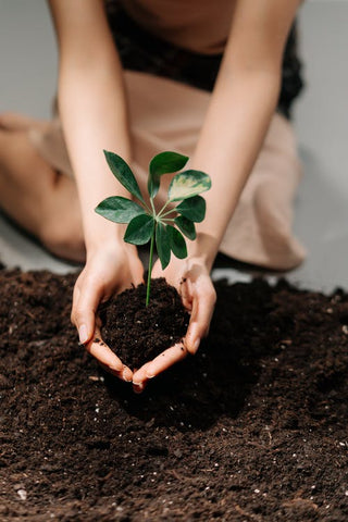 A girl in a sitting position holding a sapling under soil