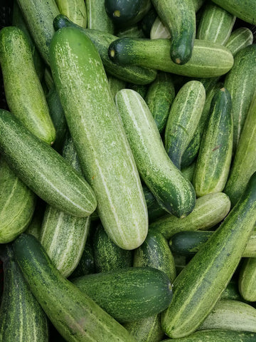 A bunch of fresh long and green cucumbers