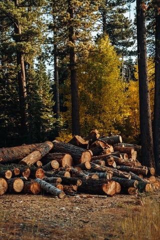 Logs of wood cut in a forest