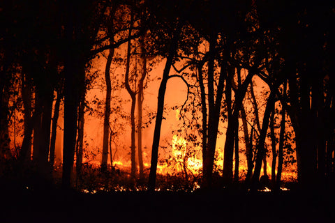 A forest fire