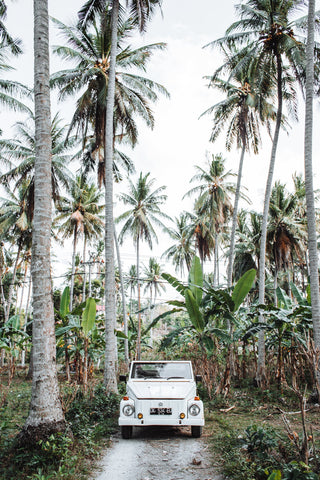 A white jeep parked around palm trees