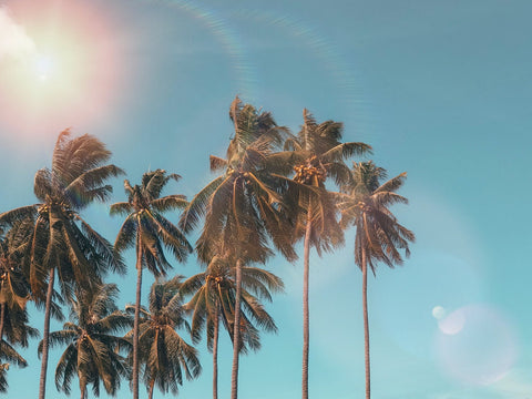 Coconut trees with the Sun above them
