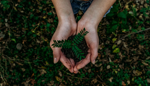 Hands holding a small sapling along with mud