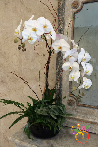 Orchid Planter with Foliage Accents