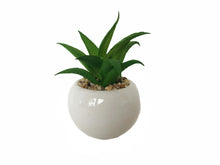 Load image into Gallery viewer, We have included a fun artificial stucco plant in our Blossom Box.  This plant will come add a little bit of color as we wait for the beautiful spring flowers.