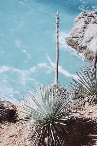 A Beginner's Guide to Tequila: Blue Agave