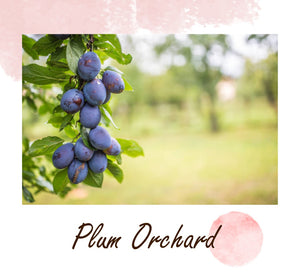 Orchard Collection - Plum