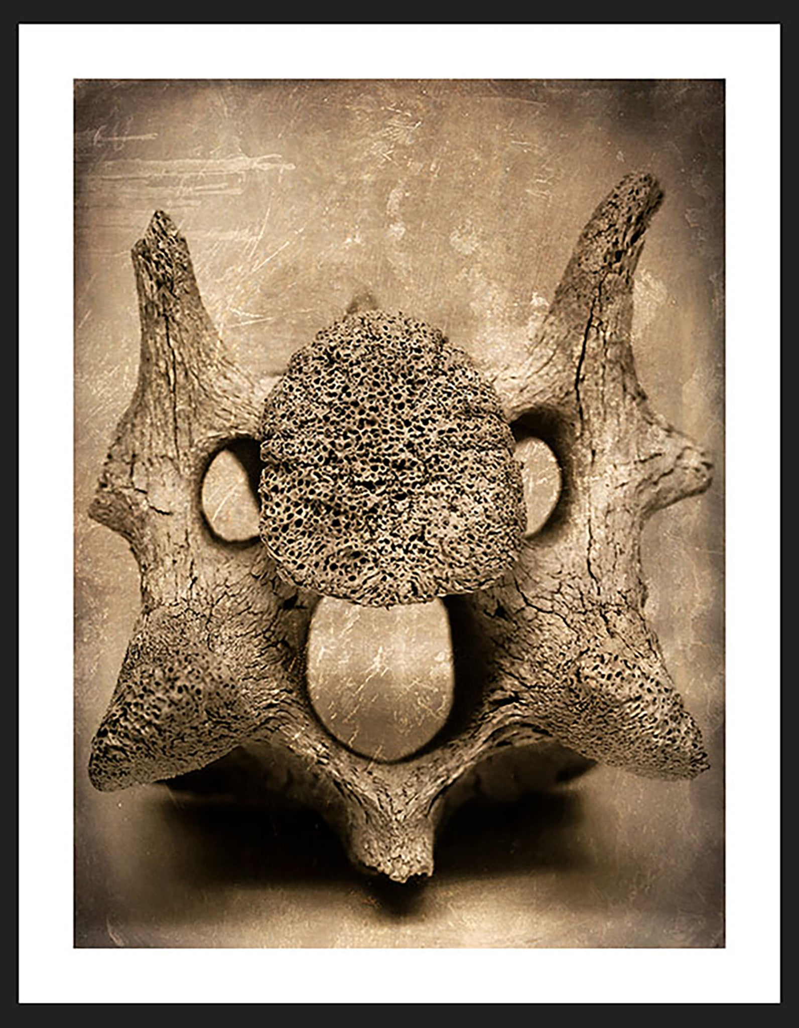 Bone photography by Adam Williams