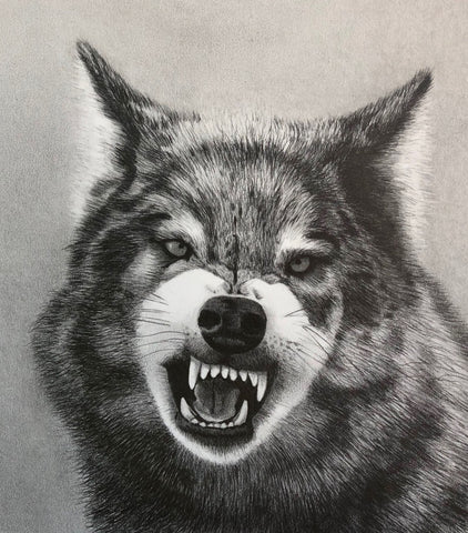 Snarl - graphite drawing by Judith Marie