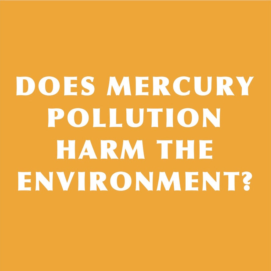 Dental Amalgam Mercury Pollution Harms the Environment