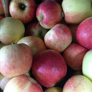 Apples-Crispier Varieties (mixed sizes 4-7 per order)