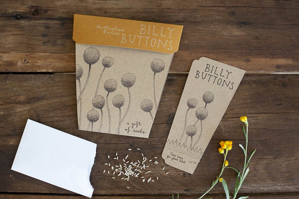 Sow n' Sow Gift of Seeds - Billy Buttons