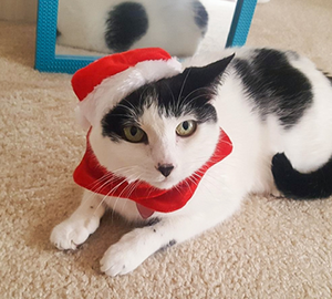 Christmas Hat Scarf Set for Small Pets