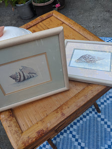 Sea Shell D. Morgan-Signed/Double Matted/Framed Two / Set