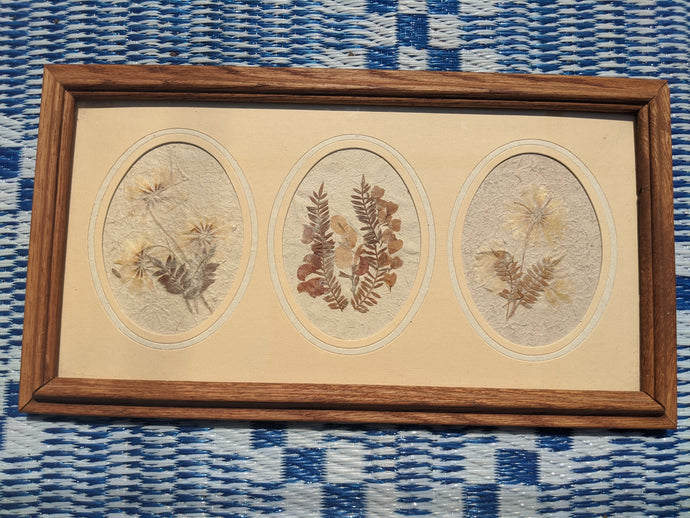 Vintage Wooden Framed Pressed Flowers from Figi Giftware - M San Diego