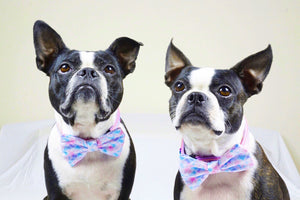 Frenchiestore Pet Bowtie | Mermazing