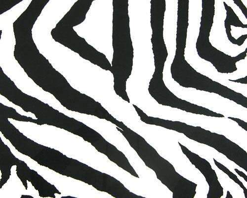 Black & White Zebra