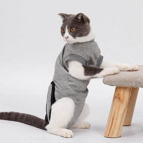 Cats Recover Suit Clothes after Sterilization